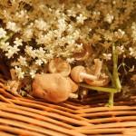 Planten-BoekII 086